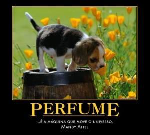 citação Perfume maquina Mandy Aftel