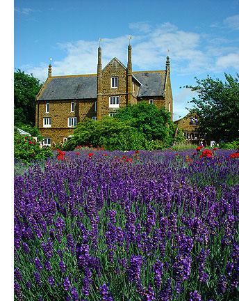 Norfolk Lavender - foto: Norfolk Lavender