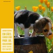 aromaterapia em cães set/17