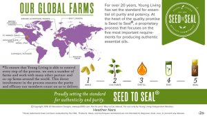YL Seed-to-Seal