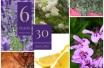 TB 6 OEs 30 Soluções plantas bx